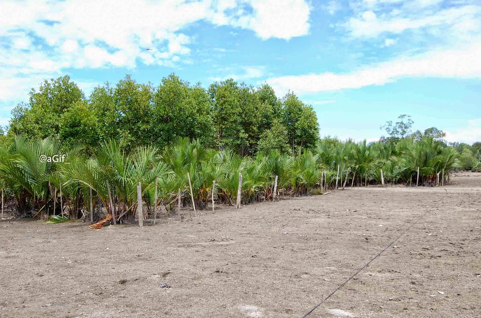 Wisata Mangrove Jaring Halus